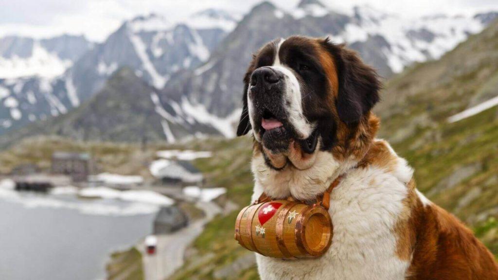 Travel Safe, Travel Smart in Switzerland