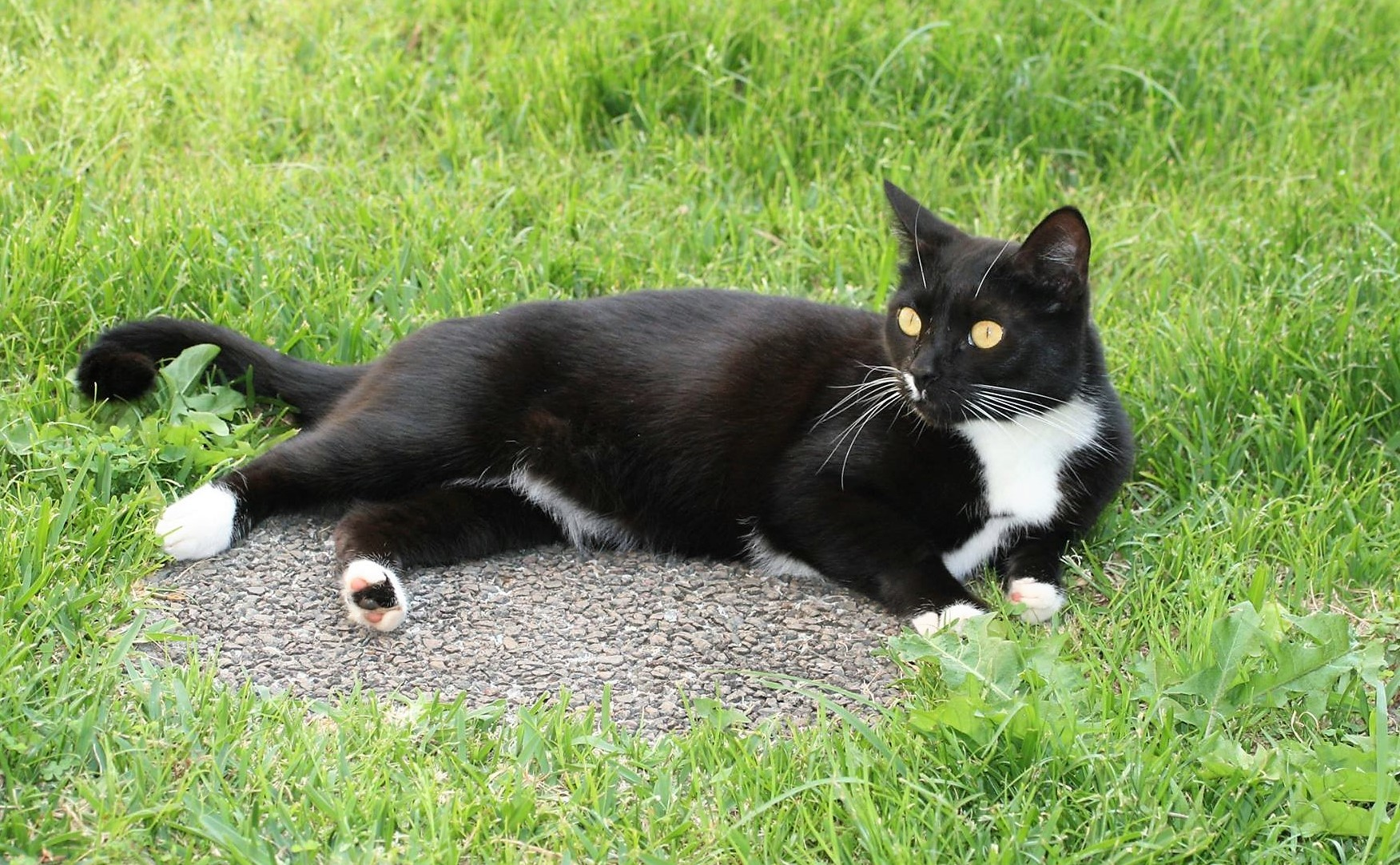 Vagabond cats in nature