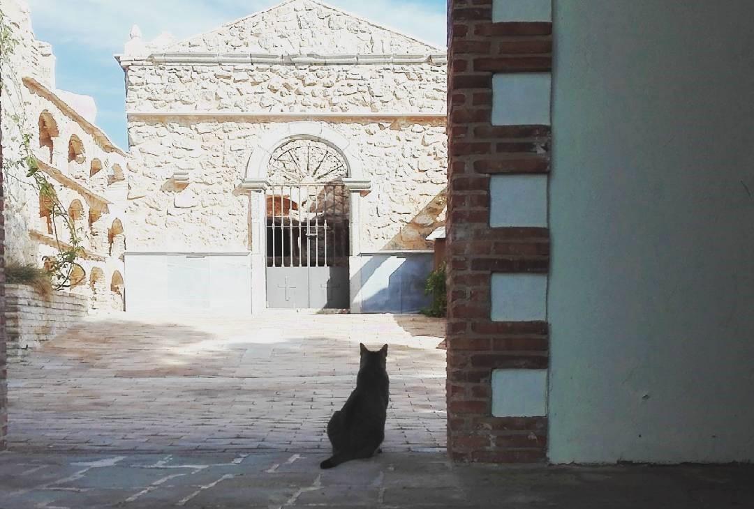 Vagabond cats in Spain