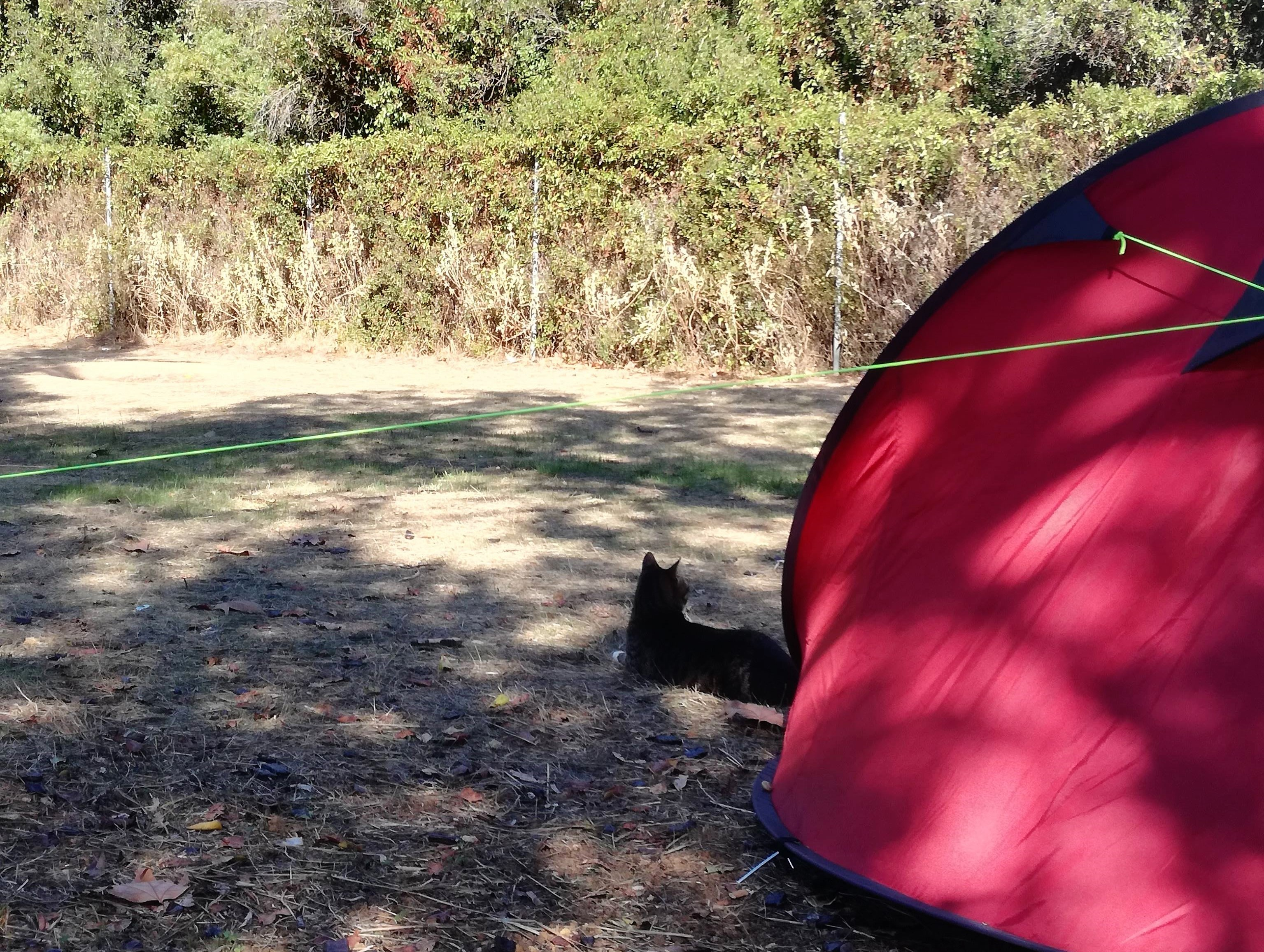 Vagabond cats in nature