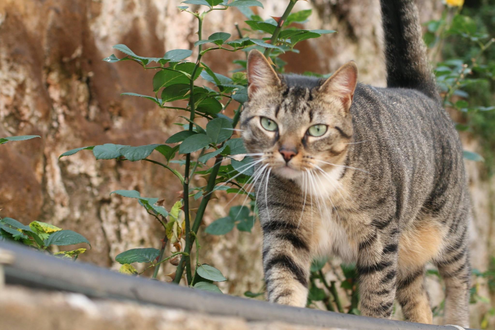 Vagabond cats